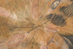 Baumschnitt Stockfotografie