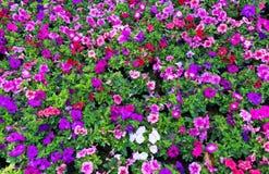 Baumschule der Blumen Stockbilder