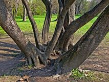 Baumsitzung Lizenzfreies Stockbild