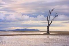 Baumskelett auf dem Strand, der Abnutzung zeigt Stockfotos
