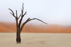 Baumskelett, Deadvlei, Namibia Lizenzfreie Stockfotografie