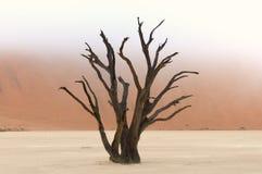 Baumskelette, Deadvlei, Namibia Stockbild