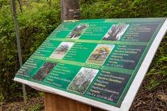 Baumspezies im Puyango-Bereich stockbild