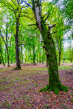 Baumstämme im grünen moosigen Wald Lizenzfreies Stockfoto