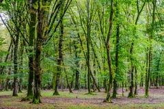 Baumstämme im grünen moosigen Wald Lizenzfreies Stockbild