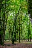 Baumstämme im grünen moosigen Wald Stockfotos