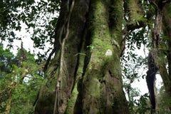 Baumstämme mit Moos in einem Wald Stockbild
