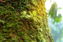 Baumstämme mit Moos in einem Wald Stockbilder