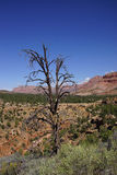 Baumstümpfe übersehen Huber-Wäsche Stockfotografie