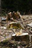 Baumstümpfe Stockfoto