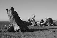 Baumstümpfe lizenzfreies stockfoto