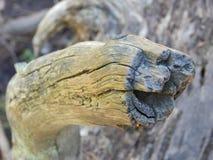 Baumstümpfe auf dem Seelächeln stockbild
