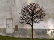 Baumstadt Stockfotografie