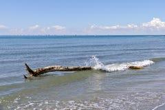 Baumstamm awashed durch Wellen Stockbild