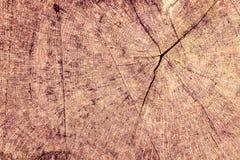 Baumstamm, der die Wachstumsringe zeigt Stockfotografie