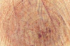 Baumstamm, der die Wachstumsringe zeigt Lizenzfreie Stockbilder
