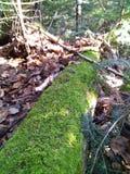 Baumstamm, der Moos gewachsen hatte Stockbild