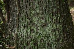 Baumstamm-Detailbeschaffenheit als natürlicher Hintergrund Lizenzfreie Stockfotos