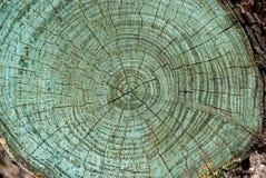 Baumstamm in einem Schnitt, grüne Sprünge Stockfotografie