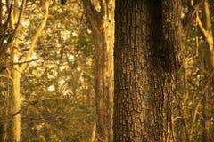 Baumstamm in einem Wald Lizenzfreies Stockbild