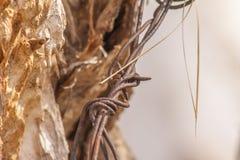 Baumstamm eingewickelt im barbwire lizenzfreie stockfotografie