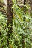 Baumstamm mit den Farnen, die im Regenwald wachsen Stockfotografie