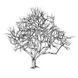 Baumstamm mit gefallenen Blättern Lizenzfreies Stockfoto