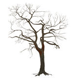 Baumstamm mit gefallenen Blättern Stockfotos