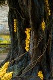 Baumstamm mit gelben Rosen Lizenzfreie Stockfotos