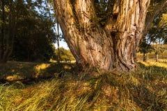 Baumstamm mit polypore und grünem Gras Stockfotografie