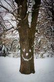 Baumstamm mit schneebedecktem Gesicht im Winter Stockbild