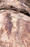 Baumstamm ohne Barke Hintergrund, Perspektive Stockbild