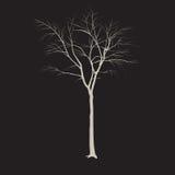 Baumstamm ohne Blätter Lizenzfreie Stockfotos