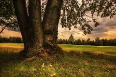 Baumstamm und grünes Gras Lizenzfreie Stockfotos