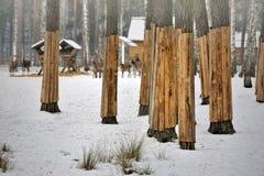 Baumstammschutz mit Brett im nationalen Erholungsgebiet Lizenzfreies Stockbild