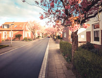 Baumstrasse in Norden Royalty Free Stock Image