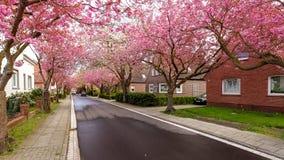 Baumstrasse in Norden Royalty Free Stock Images