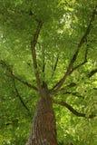 Baumstruktur von unterhalb Lizenzfreie Stockfotos