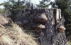Baumstumpf. Stockbild