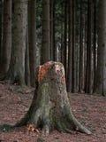Baumstumpf Stockbild