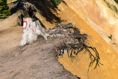 Baumstumpf Stockbilder