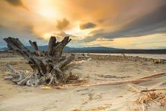 Baumstumpf auf dem Ufer Lizenzfreie Stockbilder