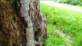 Baumstumpf auf einem englischen grünen Gebiet Stockfotos