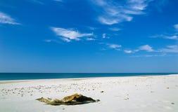 Baumstumpf auf einem Strand Lizenzfreie Stockfotografie