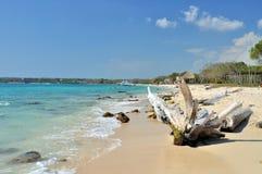 Baumstumpf auf einem Strand Stockbild