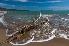 Baumstumpf auf einem Strand Lizenzfreie Stockfotos