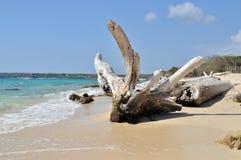 Baumstumpf auf Strand Stockfotos