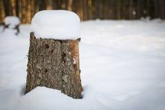 Baumstumpf bedeckt mit Schnee stockbilder