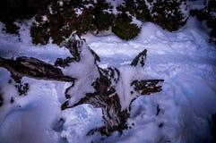 Baumstumpf bedeckt mit Schnee lizenzfreies stockfoto