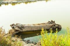 Baumstumpf, der im Wasser liegt Stockbild